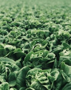 Veganer essen Salat